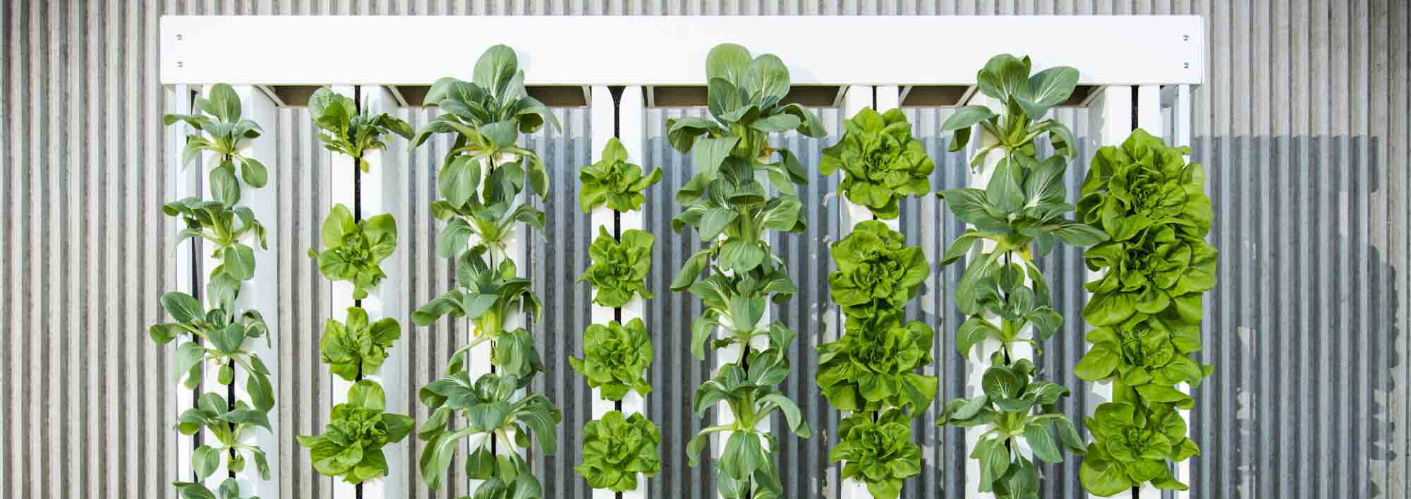 Domosfarms vertical green wall &