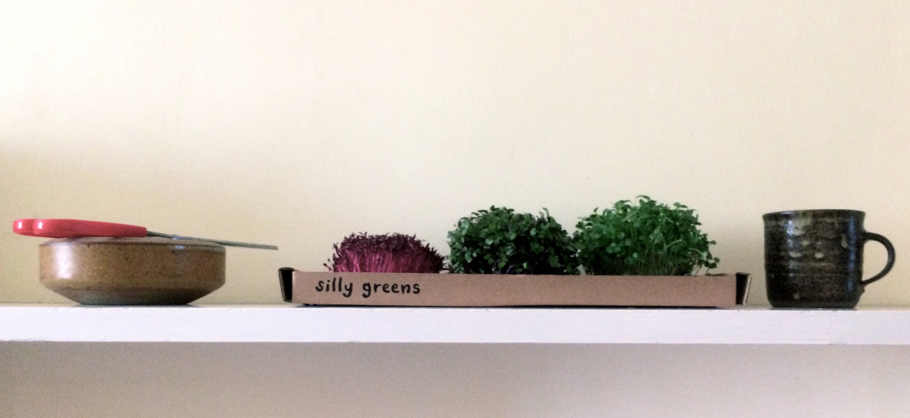 Microgreens growing in your kitchen &
